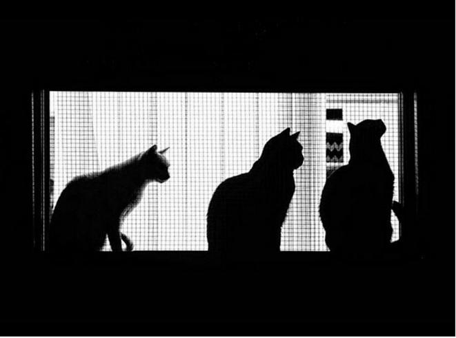 Cats © Luna TMG