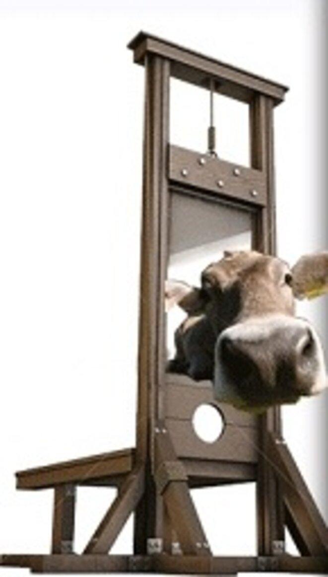 tete-de-veau-guillotine