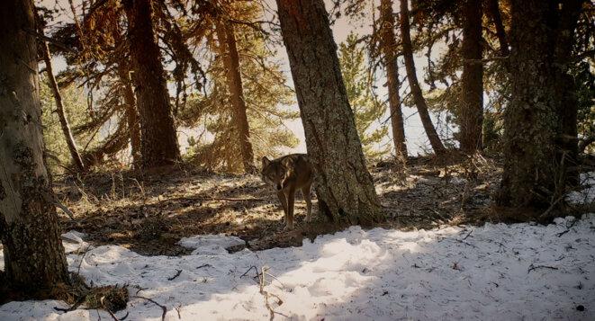 © Marche avec les loups (c) Gebeka Films