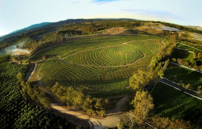 """""""Tout est possible"""" (The Biggest Little Farm) de John Chester © Le Pacte"""