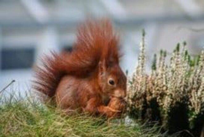 un-ecureuil-qui-mange