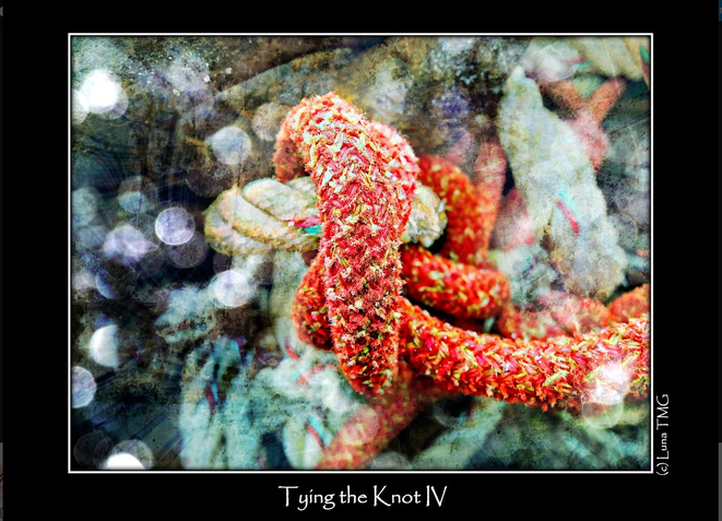 Tying the Knot IV / Les liens du mariage IV © Luna TMG