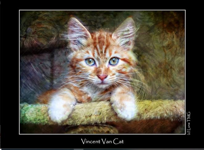 Vincent Van Cat © Luna TMG