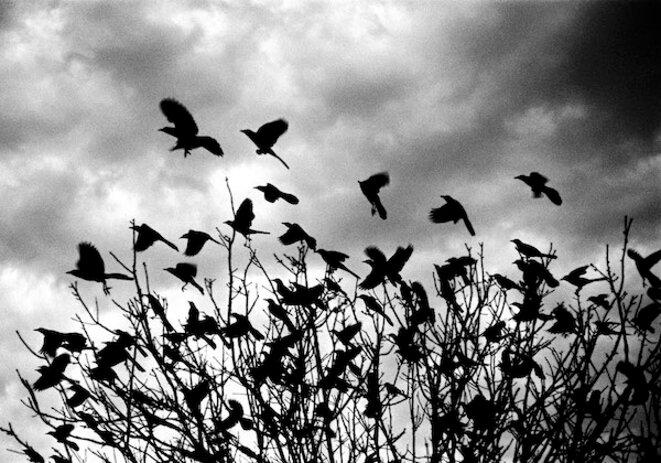 © Jean-Luc Bertini
