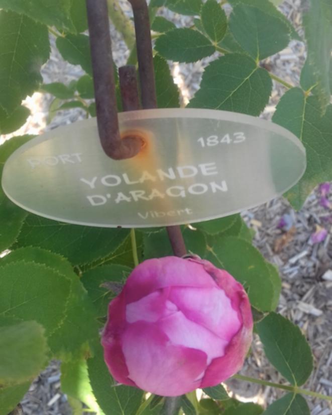 yolande-daragon-blog