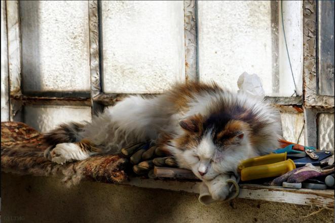 Old Leo Sleeping © Luna TMG