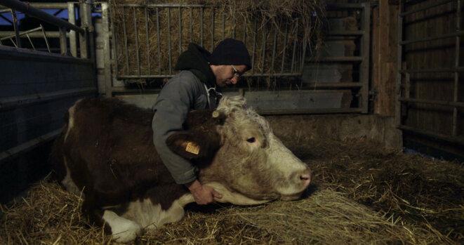 - « Certains jours, je ne parle qu'à mes vaches ou à mon chien » - © (c) ARP Sélection