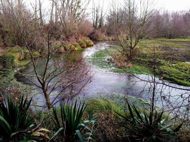 mauves-decembre-2013-7