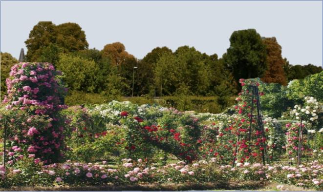 roseraie-square-pour-blog