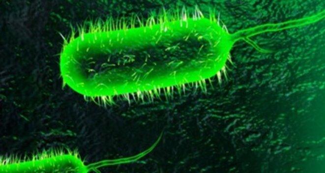 cholera-1