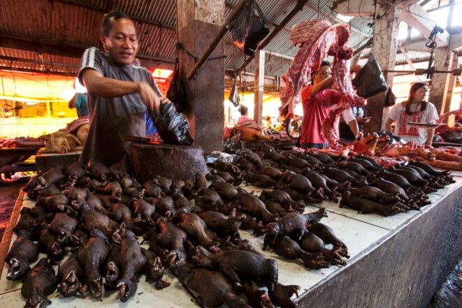 Vente de chauves-souris sur un marché en Indonésie (2014). © Michel Gunther / Biosphoto