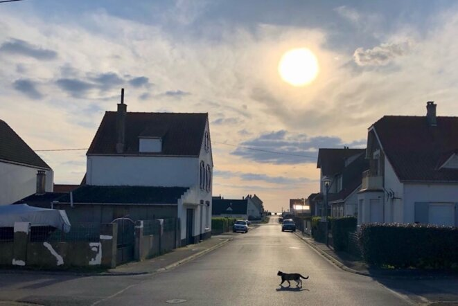 A cat prowls freely amid the lockdown in Audresselles. © JLLT / MP