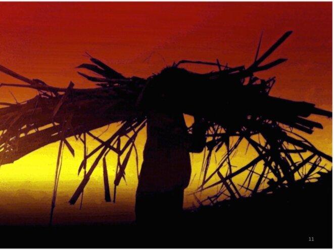 Chargement à la main dans les champs de cannes à sucre, à l'île de la Réunion. © Claude Testa