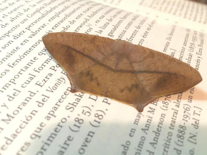 A Tinjaca (Colombie), papillon de nuit posé sur des pages de Walter Benjamin.