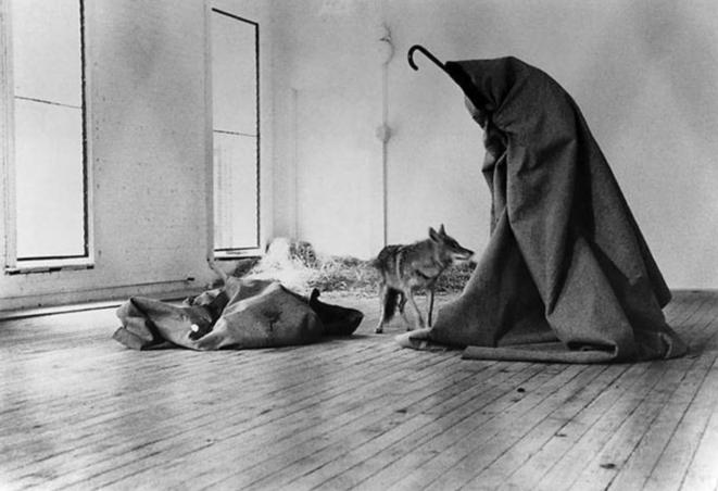 En 1974 Joseph Beuys reste enfermé dans une galerie plusieurs jours avec un coyotte pour la performance « I Like Amerika, Amerika likes me. »