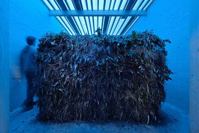 """Lois Weinberger, """"Laubreise"""", container, bois, feuillage, 500 x 400 x 420 cm, tas de plantes en décomposition, compost  350 x 250 x 170 cm, Pavillon autrichien, Biennale de Venise, 2009. © Lois Weinberger / Rubner Haus"""