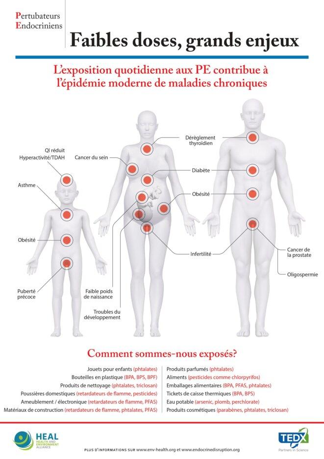 Infographie sur effets des PEs sur la santé © TEDX-HEAL