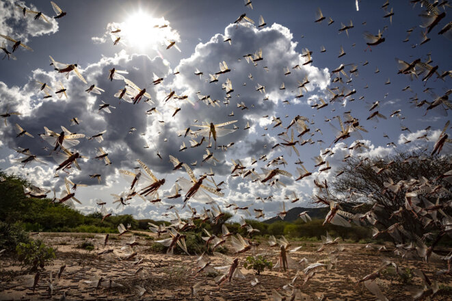 Dans le nord-est du Kenya le 31 mars 2020. © FAO/Sven Torfinn