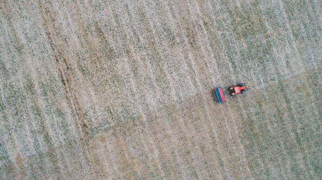 Grandes cultures à Courances (91) : une nouvelle façon de produire | Bruno Saillet, ingénieur agricole, développe une agriculture biologique climatique, économe et positive qui alterne culture du blé et du colza, favorisant le développement du trèfle qui permet de limiter l'érosion et nourrit les brebis. Cet écosystème pourrait servir de modèle à l'urbanisation. © Arnauld Duboys Fresney