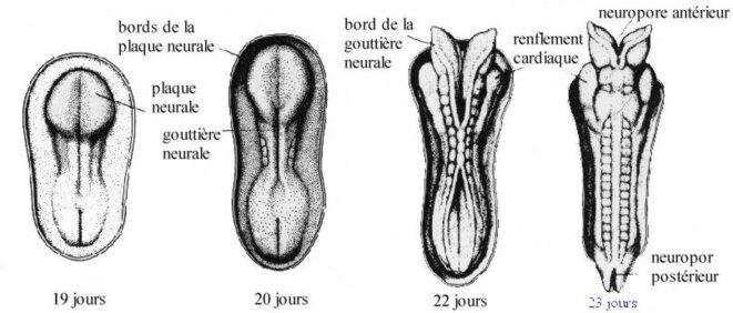 dev-tube-neural