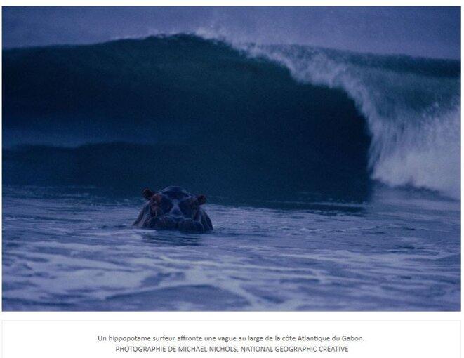 Un hippopotame surfeur affronte une vague au large de la côte Atlantique du Gabon – PHOTOGRAPHIE DE MICHAEL NICHOLS, NATIONAL GEOGRAPHIC CREATIVE