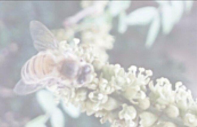 Art Orienté Objet, L'abeille blanche : nature au carré, 2020, dessin prépratoire pour une mosaïque, tirage photo sur dibond, 100 x 150 cm (Photo AOO)