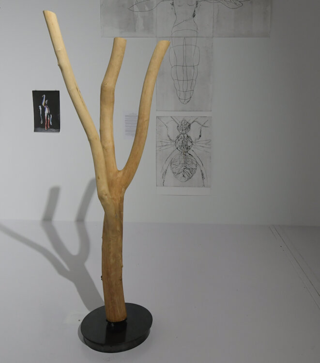 Erik Samakh, Essaim n°1, Tronc d'arbre (frêne), système sonore, 2018 (Photo Luc Jennepin)