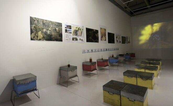 L'Abeille Blanche, salle des projets, préfiguration du centre d'art des abeilles à Maubourguet