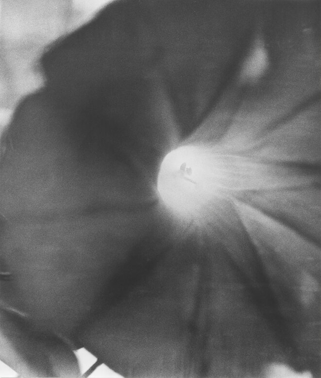 Jochen Lempert, Untitled (Morning Glory), 2019 Photograhie noir/blanc sur papier baryté mat, 113 x 96,2 cm, édition de 5. © Jochen Lempert / ADAGP, Paris 2020 Courtesy galeries : ProjecteSD (Barcelone) et BQ (Berlin)