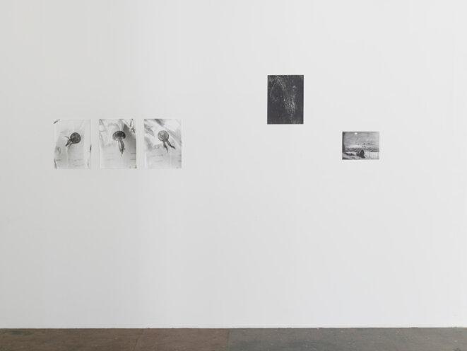 Vue de l'exposition Jardin d'hiver de Jochen Lempert, Centre d'art contemporain d'Ivry – le Crédac, 2020. De gauche à droite : Untitled (Plastic Bag), 2017 ; Noctiluca, 2017 ; Noctiluca (after Hercule Florence), 2016. © Jochen Lempert / ADAGP, Paris, 2020. Courtesy de l'artiste et des galeries ProjecteSD (Barcelone) et BQ (Berlin). Photo : André Morin / le Crédac.