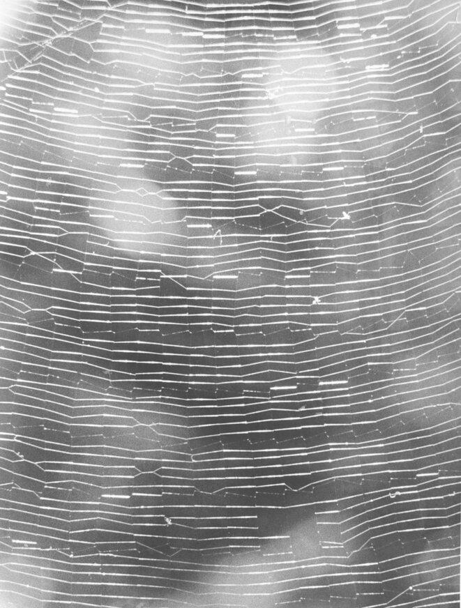 Jochen Lempert, Full Spiderweb, 2012 / 2015 Photograhie noir/blanc sur papier baryté mat © Jochen Lempert / ADAGP, Paris 2020 Courtesy galeries : ProjecteSD (Barcelone) et BQ (Berlin)