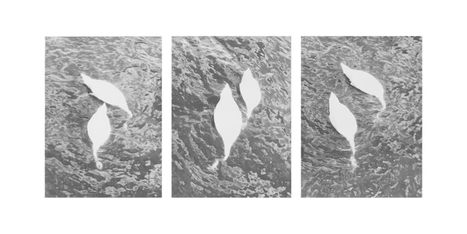 Swans (Stockholm), 2018 Photograhie noir/blanc sur papier baryté mat © Jochen Lempert / ADAGP, Paris 2020 Courtesy galeries : ProjecteSD (Barcelone) et BQ (Berlin)