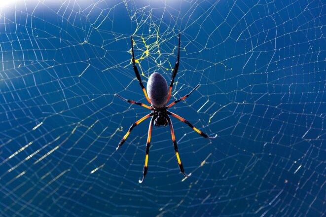 Qui sera pris dans la toile? / L'homme a un destin de mouche © GettyImage