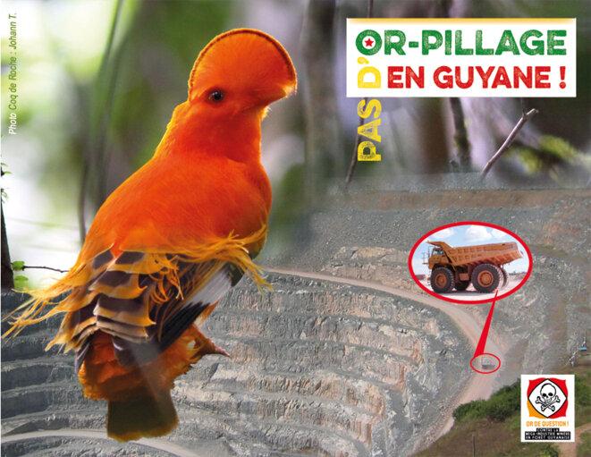 L'industrie minière nuit gravement à la biodiversité d'Amazonie Française.