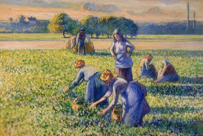 «La cueillette des pois», de Camille Pissarro. © DR