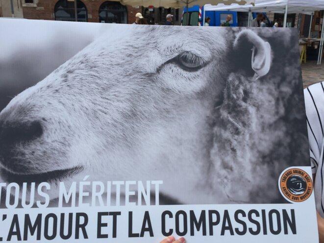 L'association L214 étend le propos au respect de l'animal © AB
