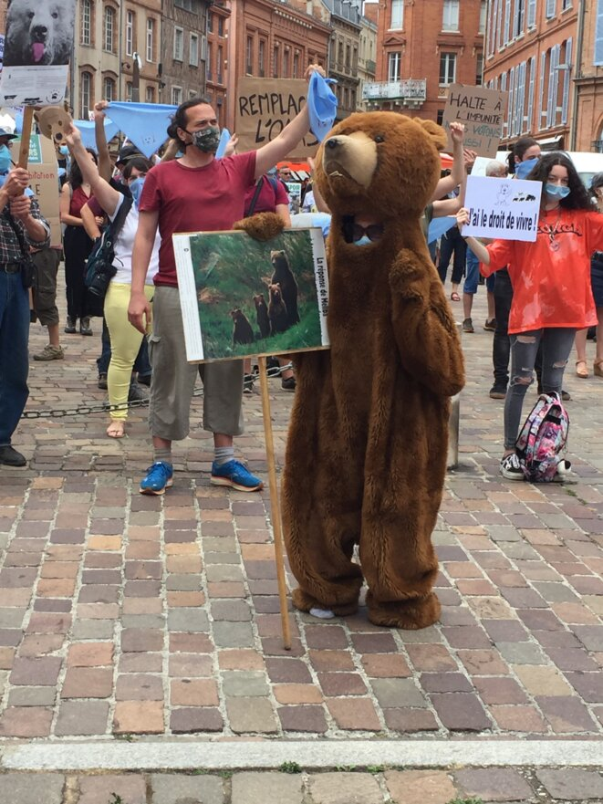 L'Ours à Toulouse © AB