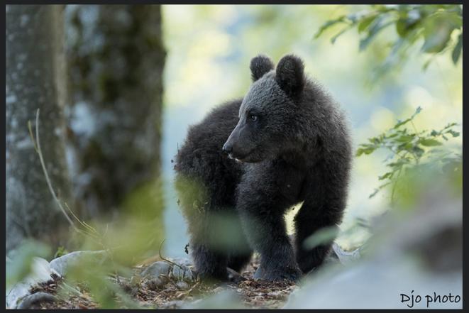 little cub | Djo Djokkos © Djo Djokkos