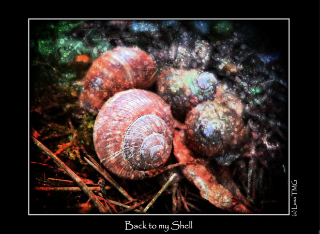 Back to my Shell / Retour à ma Coquille © Luna TMG Flickr