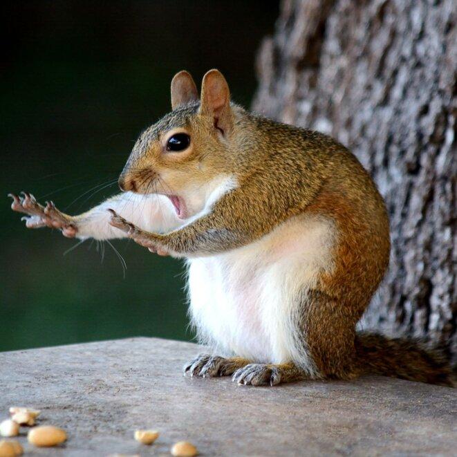 squirrel-preacher