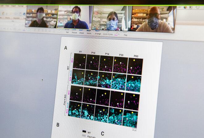 Zoom : Lee (à gauche) en vidéoconférence avec des collègues même lorsqu'ils sont tous présents au labo © Spectrum News / Julia Robinson