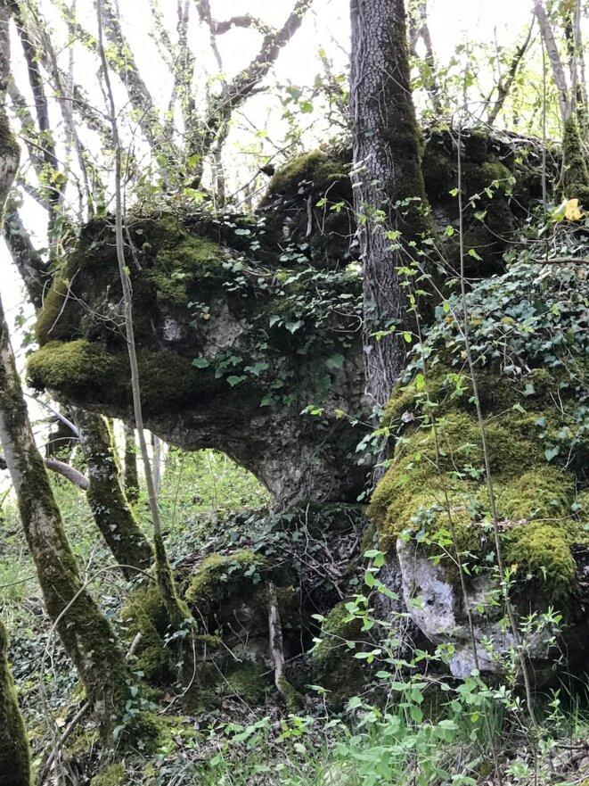 Pierre levée/ Gardée par les épineux/ Les ancêtres veillent// Leur priapique prière /Féconde encor la forêt © JNC
