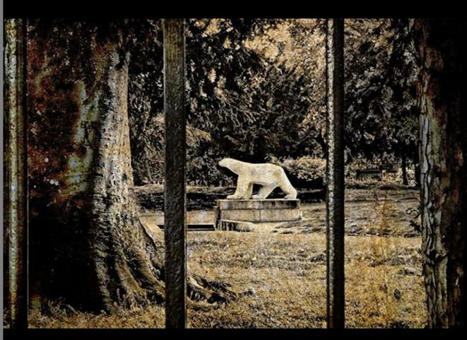 Ours de Pompon, confiné derrière les grilles du parc Darcy. - Dijon © Luna TMG Instagram