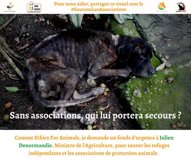Sans associations et refuges indépendants, que deviendraient les animaux ? © Clea LETHI / ETHICS FOR ANIMALS