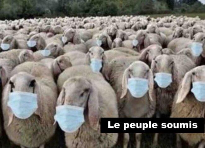 Orage cytokinique mortelle provoqué par les futurs vaccins covid 19 - Stop à la folie vaccinale  Moutons-masques-300