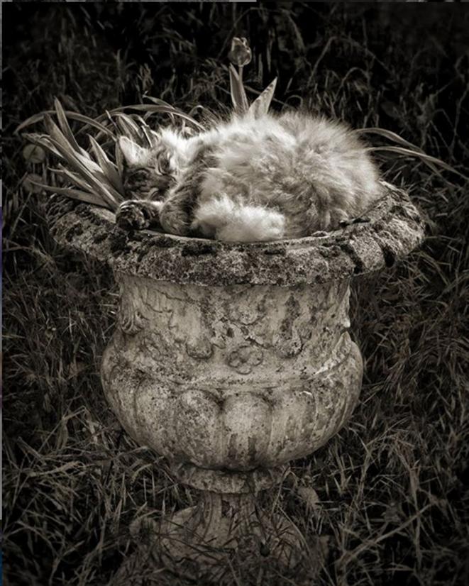 Puccinella ... confinée dans un pot © Luna TMG Instagram