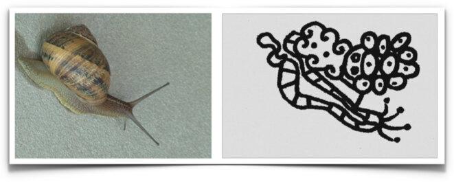 En état bicaméral une adolescente dessine un escargot © Christian Bois