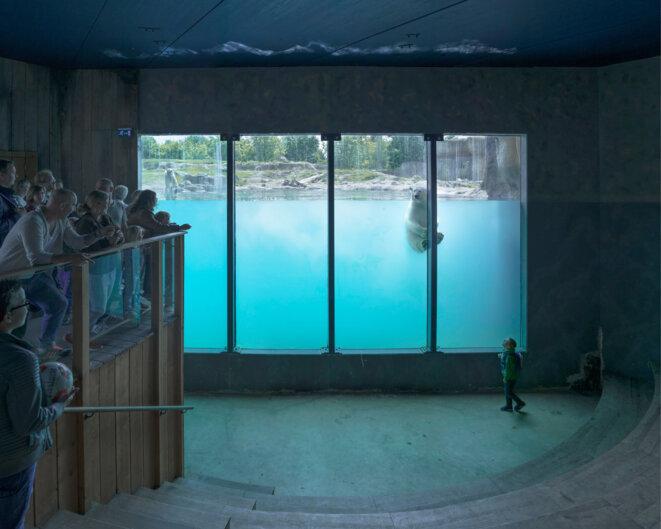 Sheng-Wen Lo, Zoo Blijdorp de Rotterdam, Pays-Bas (2016), de la série White Bear, depuis 2014 © Sheng-Wen Lo