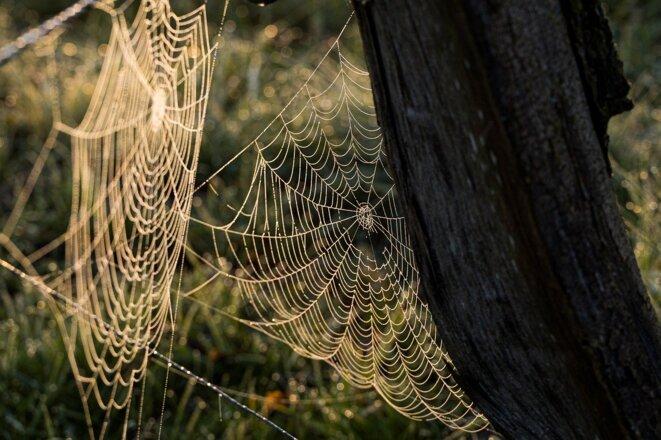 Toile d'araignée © «Marcelkessler»/Pixabay.com. Usage libre: licence Pixabay