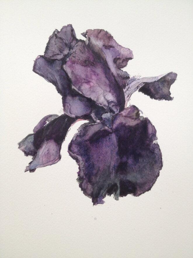 Patrick Neu, Iris,1992-2010, aquarelles sur papier, coll. de l'artiste © Patrick Neu